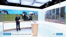 Agriculture : les ondes troublent-elles les élevages ?