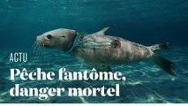 Comment le matériel de pêche abandonné dans l'océan décime la biodiversité