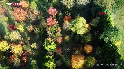 Sonbahar renklerine bürünen İstanbul ormanları