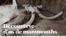 Les restes de 14 mammouths chassés par l'homme découverts au Mexique