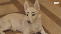 新たな飼い主と幸せな生活を送る眉毛犬