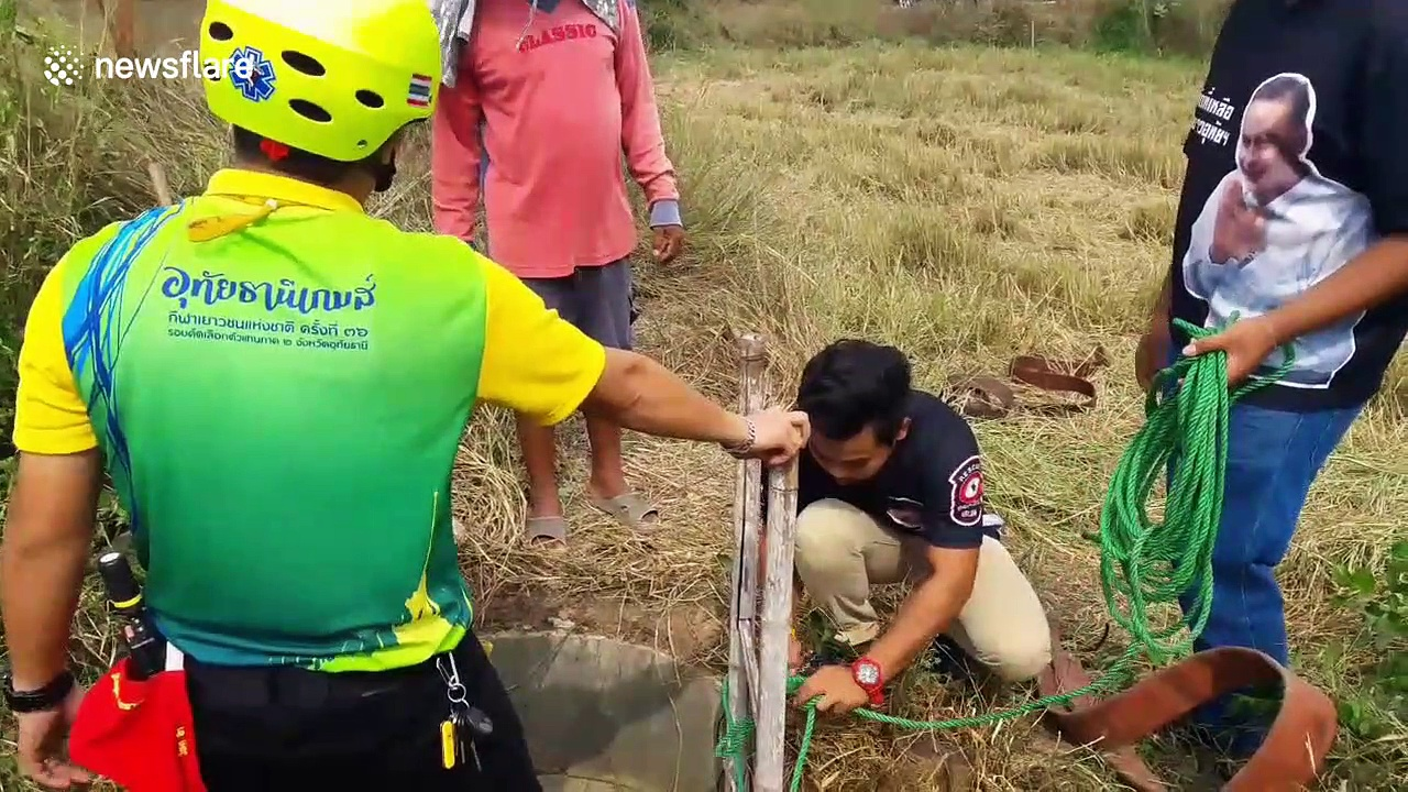 Buffalo rescued after falling into 16ft-deep well in Thailand