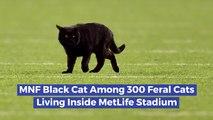MetLife Stadium Has A Cat Problem