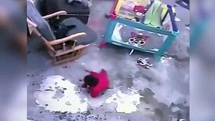 Gato salva a bebé en una increíble maniobra