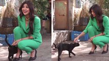 Shilpa Shetty playing with street cat at Filmistan Studio | Boldksy