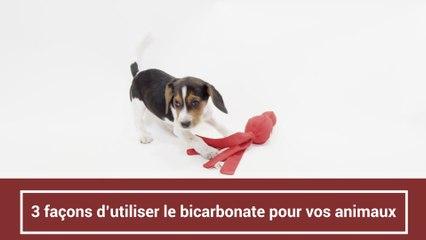 3 façons d'utiliser le bicarbonate pour vos animaux
