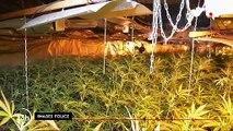 Cannabis : saisie record à Roubaix