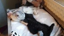 Michèle recueille des chats à Fleurus