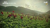 [9화 예고] 회사 돈으로 산 거대한 배추밭의 정체는?!