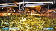 Roubaix : une saisie record de cannabis