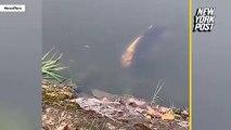 Un poisson à visage humain nageant dans un lac
