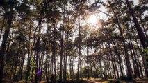 Japon teknoloji firması Sony, bu videonun izlenme sayısı kadar ağaç dikecek