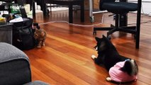 Pet dog stops cat stealing from bag