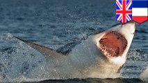 放假也不能大意 英國男渡假意外淪鯊魚午餐