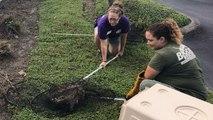 Life-Saving Bobcat Rescue!