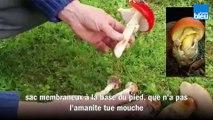 Cueillette des champignons : éviter les erreurs