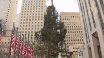 Le sapin géant du Rockefeller Center vient d'arriver à New York