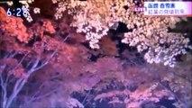 2019 10 31 NHK ほっと ニュース アイヌモシリ【 神聖なる アイヌモシリからの 自由と真実の声】