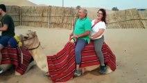 Ce chameau n'a pas pu se tenir debout à cause du surpoids d'un couple assis sur son dos