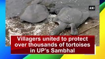 Villagers united to protect over thousands of tortoises in UP's Sambhal
