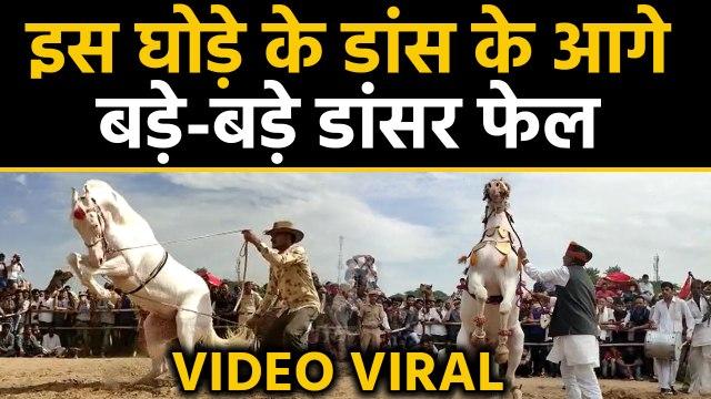 Pushkar पशु मेले में  disco dance करने वाली Horse का  video Viral| वनइंड़िया हिंदी