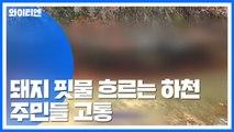 살처분 돼지 핏물에 방제 총력...걱정 여전 / YTN