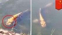 Penampakan ikan mas berwajah manusia di Cina - TomoNews