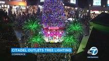 Californie : le plus grand sapin de Noël naturel au monde vient d'être installer