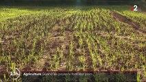 Agriculture : des paysans fabriquent et vendent leur pain