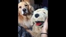 Hilarant : quand ton chien est jaloux d'une peluche