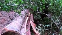 Amazing Fastest Skills Big Tree Felling, Extreme Chainsaw Cutting Tree Machines Work