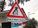 Beşiktaş'ın sokaklarında 'Kedi ve Köpek Çıkabilir' farkındalığı