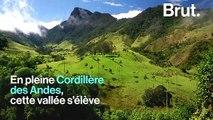 Une vallée féerique en Colombie abrite les plus grands palmiers du monde