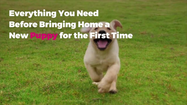 Everything You Need Before Bringing Home a New Puppy for the First Time