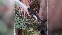 Tel Abyad ve Rasulayn'ın su sorunu çözülüyor