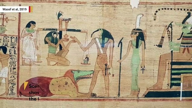 People In Ancient Egypt Collected Birds For Ritual Sacrifice