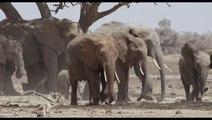 The Elephant Queen | Deadline's The Contenders Los Angeles