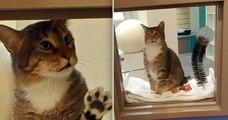 Roi de la belle, ce chat passait ses nuits à ouvrir les portes de son refuge pour permettre à tous les chats de s'évader