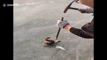 Il libère un canard prisonnier d'un bloc de glace avec un marteau !