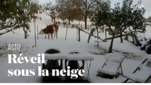 Le Sud-Est de la France se réveille sous la neige
