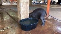 Bain d'un bébé éléphant : il en met partout mais a l'air tellement heureux !
