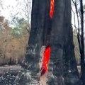 Cet arbre brûle de l'interieur après un feu de foret.