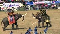 Elefanten in Thailand stellen Schlacht nach