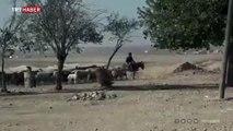 Rasulayn'da tarım ve hayvancılık faaliyetleri başladı