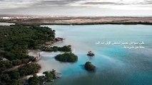 شاهد: قافلة من الإبل تسبح في البحر الأحمر في السعودية
