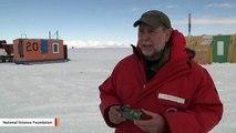 Cameras Strapped To Antarctic Seals Reveal Their Secret Lives