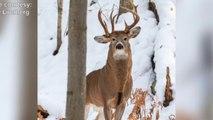 Un cerf à trois bois photographié dans le Michigan