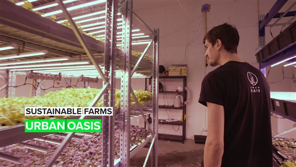 Sustainable Farms: Get your daily dose of leafy greens here