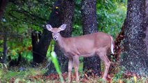Man Mistakenly Shoots Brother While Hunting For Deer