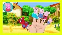 Peppa Pig Eating Lollipop New Episodes With Spiderman VENOM HULK Finger Family Nursery Rhymes Py